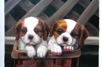 Portrait of Puppies